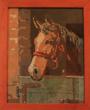 Testa di cavallo piccola